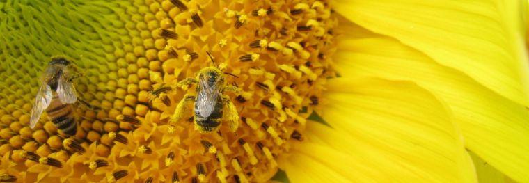 bees_header